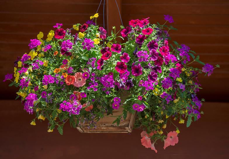 Blooming Baskets