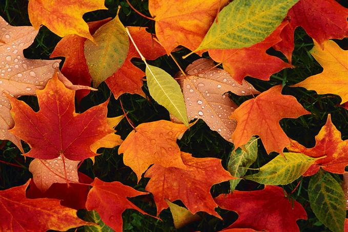 Fall for Autumn Colour