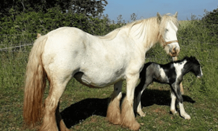 Todwick & Kiveton Pony Rescue